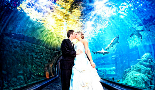 Top 5 weirdest wedding locations shareagift for Shark tank wedding dress