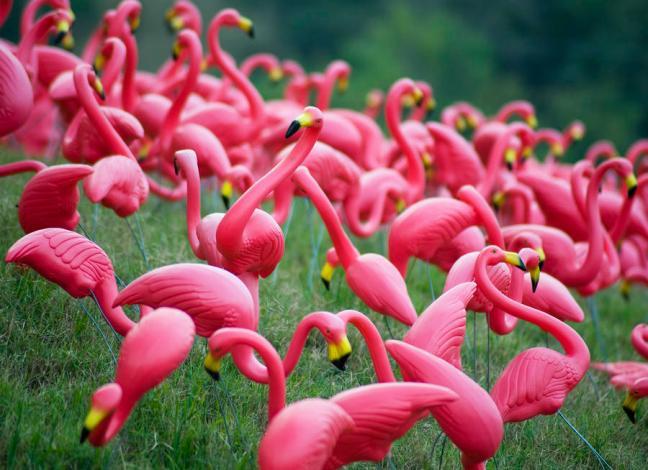plastic flamingos